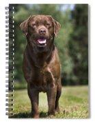 110506p183 Spiral Notebook