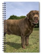 110506p186 Spiral Notebook