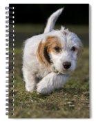 110506p208 Spiral Notebook