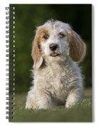 110506p211 Spiral Notebook