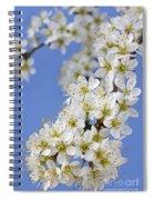 110506p225 Spiral Notebook