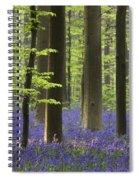 110506p243 Spiral Notebook