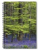 110506p248 Spiral Notebook