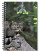 110613p008 Spiral Notebook