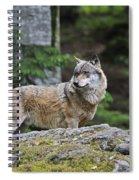 110613p022 Spiral Notebook