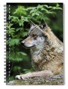 110613p024 Spiral Notebook