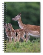 110613p158 Spiral Notebook