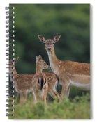 110613p159 Spiral Notebook