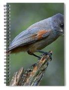 110613p214 Spiral Notebook