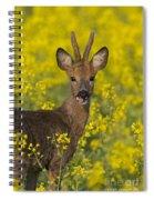 110714p140 Spiral Notebook