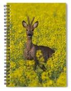 110714p142 Spiral Notebook