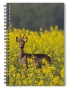110714p143 Spiral Notebook