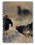 110714p174 Spiral Notebook