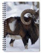 110714p271 Spiral Notebook