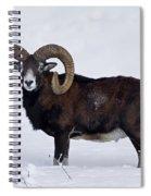 110714p275 Spiral Notebook