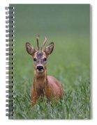 110714p319 Spiral Notebook