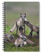 111130p059 Spiral Notebook