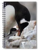 111130p146 Spiral Notebook