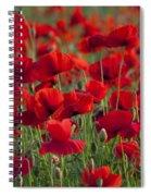111216p031 Spiral Notebook