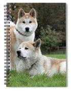 111216p239 Spiral Notebook