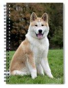 111216p241 Spiral Notebook