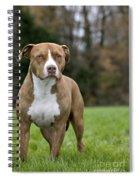 111216p246 Spiral Notebook