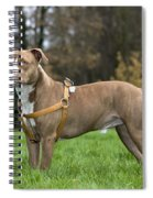 111216p248 Spiral Notebook