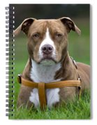 111216p249 Spiral Notebook