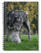 111216p252 Spiral Notebook