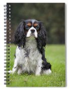 111216p255 Spiral Notebook