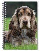 111230p046 Spiral Notebook