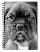 Boxer Dog Spiral Notebook