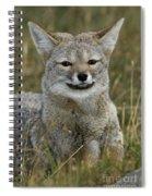 Patagonia Grey Fox Spiral Notebook