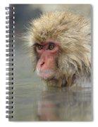 Snow Monkeys Spiral Notebook