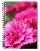 Sweet William From The Super Duplex Bluepoint Mix Spiral Notebook