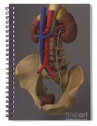 The Renal System Spiral Notebook