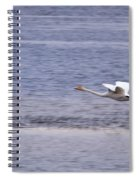 Whooper Swan Spiral Notebook