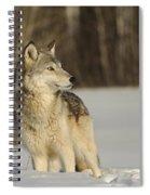 Wolf In Winter Spiral Notebook