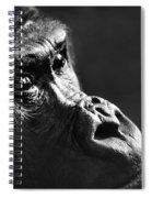 120118p088 Spiral Notebook