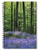 120206p191 Spiral Notebook
