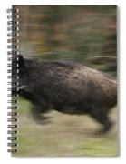 120223p245 Spiral Notebook