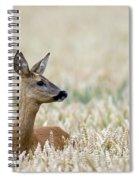 120425p010 Spiral Notebook