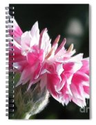 Bachelor Button From The Frosted Queen Mix Spiral Notebook
