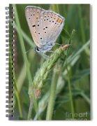 13 Balkan Copper Butterfly Spiral Notebook