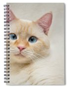 Flame Point Siamese Cat Spiral Notebook