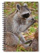 Raccoon Spiral Notebook