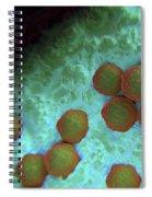 Rubella Virus Spiral Notebook