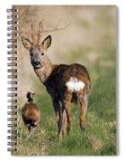 130201p187 Spiral Notebook
