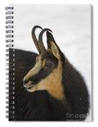 130201p201 Spiral Notebook