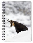 130201p229 Spiral Notebook